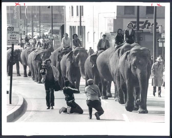 Elephants parade through the city in 1983. (Baltimore Sun)