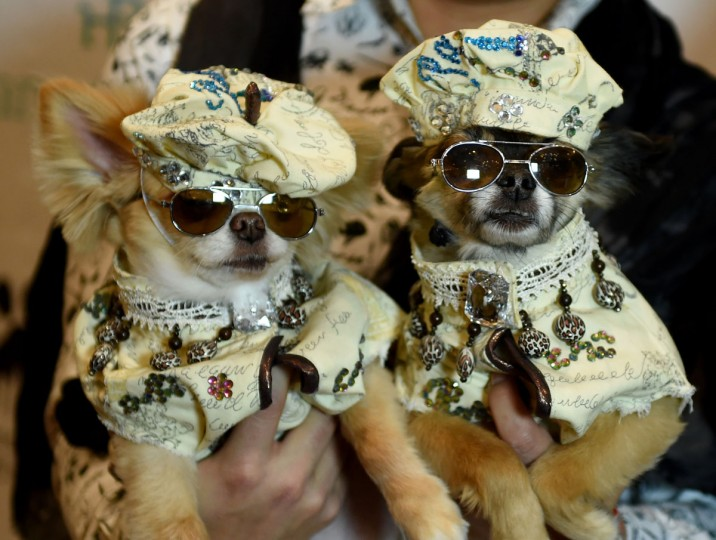 Dogs dressed in the fashion of France and contestants in the World Fashion Presents segment pose during the 14th Annual New York Pet Fashion Show presented by TropiClean at the Hotel Pennsylvania February 9, 2017. (TIMOTHY A. CLARY/AFP/Getty Images)