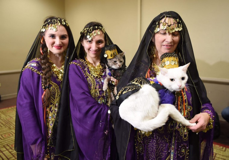 Woman with their cats dressed in the fashion of Armenia and contestants in the World Fashion Presents pose during the 14th Annual New York Pet Fashion Show presented by TropiClean at the Hotel Pennsylvania February 9, 2017. (TIMOTHY A. CLARY/AFP/Getty Images)