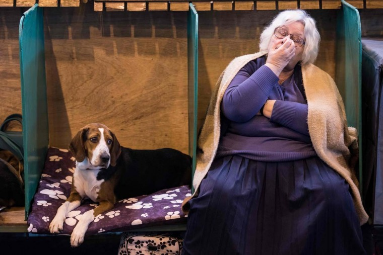 A woman rests next to a Hamiltonstovare (Hamilton Hound) dog on the first day of the Crufts dog show at the National Exhibition Centre in Birmingham, central England, on March 9, 2017. (OLI SCARFF/AFP/Getty Images)