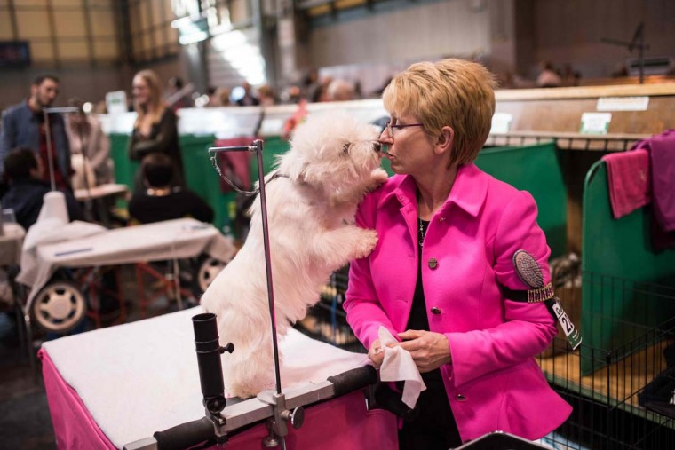 A woman grooms her West Highland White Terrier dog on the first day of the Crufts dog show at the National Exhibition Centre in Birmingham, central England, on March 9, 2017. (OLI SCARFF/AFP/Getty Images)