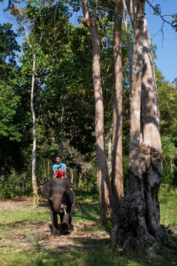 This picture taken on March 26, 2017 shows an Indonesian forest ranger taking his child for a ride on a captive Sumatran elephant before setting out on a patrol in Aceh Jaya, Aceh province. (CHAIDEER MAHYUDDIN/AFP/Getty Images)