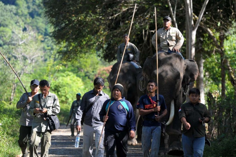 This picture taken on February 25, 2017 shows Indonesian forest rangers with their captive Sumatran elephants set out on a patrol in Ulu Masen forest at Aceh Jaya, Aceh province. (CHAIDEER MAHYUDDIN/AFP/Getty Images)
