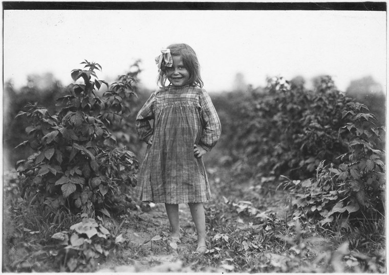"Original Caption: Laura Petty, a 6 year old berry picker on Jenkins Farm. ""I'm just beginnin'. Licked two boxes yesterday."" Gets 2 [cents] a box. Rock Creek, Md, June 1909. (Lewis Hine/Photo courtesy of NARA)"