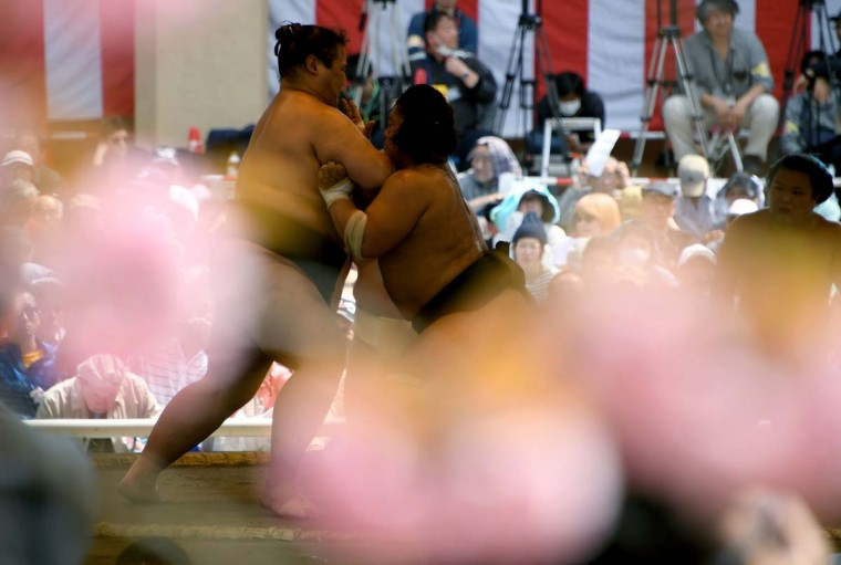 """Sumo wrestlers take part in a """"honozumo,"""" a ceremonial sumo exhibition, on the grounds of Yasukuni Shrine in Tokyo on April 17, 2017. Sumo's top wrestlers took part in an annual one-day exhibition for thousands of spectators within the shrine's precincts. (TOSHIFUMI KITAMURA/AFP/Getty Images)"""