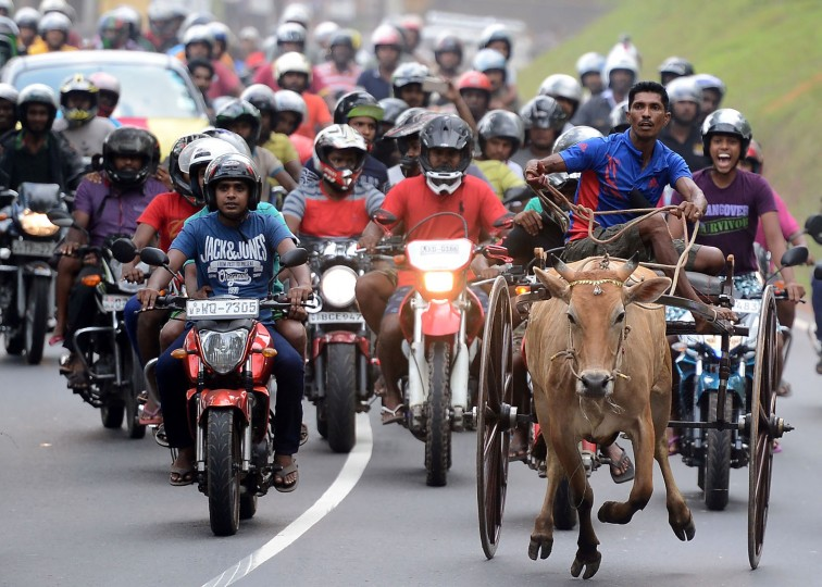 Sri Lankan participants control their bulls during a traditional cart race to mark the Sri Lanka National New Year in Homagama near Colombo on April 23, 2017. The new year marked by both the majority Sinhalese and minority Tamil population fell on April 14. (Lakruwan Wanniarachchi/AFP/Getty Images)