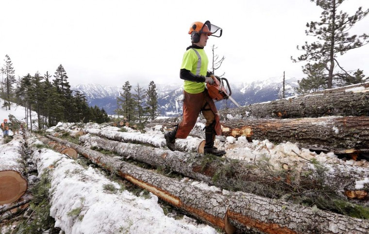 In this Feb. 22, 2017, photo, Trevor Gibson walks atop logs he'll cut into shorter sections as part of a crew thinning a 100-acre patch on private land owned by the Nature Conservancy overlooking Cle Elum Lake, in Cle Elum, Wash. As part of a broader plan by the nonprofit environmental group to restore the pine forests of the Central Cascades so they are more resilient to wildfires and climate change, they're cutting down trees to save the forest. (AP Photo/Elaine Thompson)