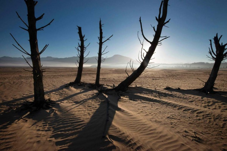 A picture taken on May 10, 2017 shows bare sand and dried tree trunks standing out at Theewaterskloof Dam, which has less than 20% of it's water capacity, near Villiersdorp, about 108km from Cape Town. South Africa's Western Cape region which includes Cape Town declared a drought disaster on May 22 as the province battled its worst water shortages for 113 years. This dam is the main water source for the city of Cape Town, and there is only 10% of it's usual capacity left for human consumption, at the last 10% is not usable, due to the silt content. (RODGER BOSCH/AFP/Getty Images)