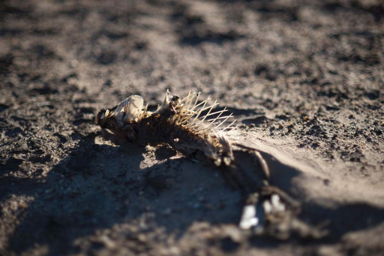 A picture taken on May 10, 2017 shows a dried out fish lying on the sand at Theewaterskloof Dam, which has less than 20% of it's water capacity, near Villiersdorp, about 108Km from Cape Town. South Africa's Western Cape region which includes Cape Town declared a drought disaster on May 22 as the province battled its worst water shortages for 113 years. This dam is the main water source for the city of Cape Town, and there is only 10% of it's usual capacity left for human consumption, at the last 10% is not usable, due to the silt content. (RODGER BOSCH/AFP/Getty Images)