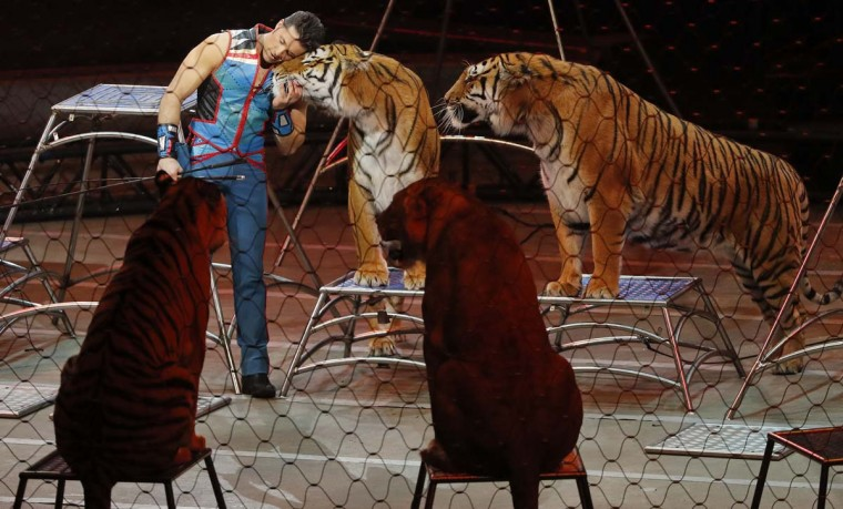 "Big cat trainer Alexander Lacey hugs one of the tigers during the final show of the Ringling Bros. and Barnum & Bailey Circus, Sunday, May 21, 2017, in Uniondale, N.Y. Ringling's circus began its final show Sunday evening after 146 years of wowing audiences with its ""Greatest Show on Earth."" (AP Photo/Julie Jacobson)"