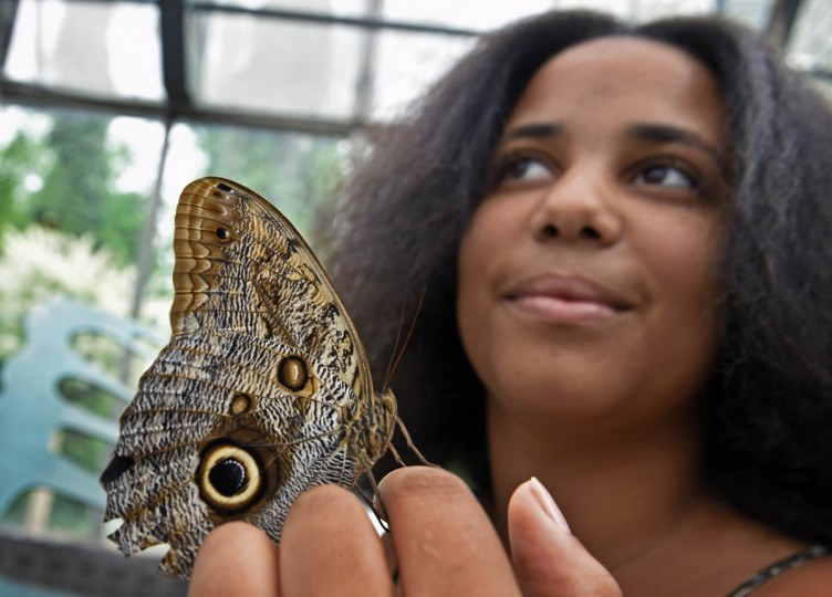A Mournful Owl butterfly (Calico eurilochus) lands on visitor Satine Diouf, of Dakar Senegal, at the Wings of Fancy exhibition at Brookside Gardens South Conservatory features over 500 and more than 50 species of live butterflies and moth from North America, Costa Rica, Africa and Asia. The exhibit runs daily from late April to mid September. (Kenneth K. Lam/The Baltimore Sun)