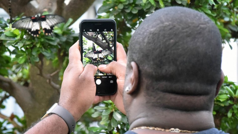 Frank Colon, of Jessup, uses his cell phone to take pictures of a female Great Yellow Mormon (Papilio lowi) butterfly. (Kenneth K. Lam/The Baltimore Sun)
