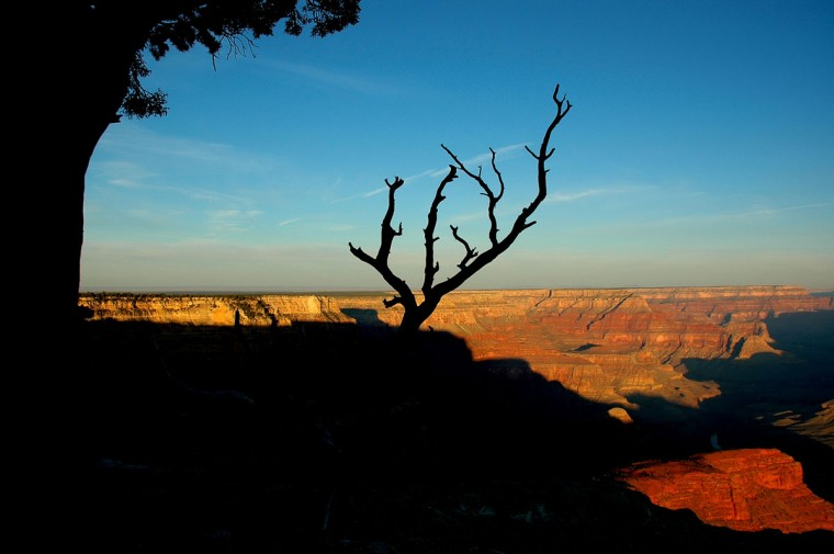 Take a familiar image up a notch, like Bob Luerssen did with this photo of the Grand Canyon by using a silhouetted tree to give the picture a point of focus.
