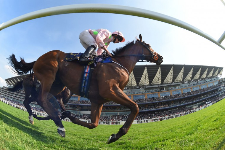 Ryan Moore on Thomas Hobson on their way to victory in the Ascot Stakes on the opening day of Royal Ascot at Ascot Racecourse on June 20, 2017 in Ascot, England. (Photo by Mike Hewitt/Getty Images)