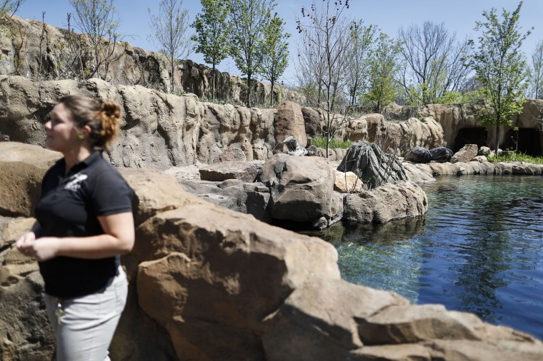 FILE - In this April 12, 2017, file photo, Zookeeper Jenna Wingate discusses a Nile hippopotamus named Fiona born prematurely on Jan. 24, during an interview next to the pool of the Cincinnati Zoo & Botanical Garden's Hippo Cove exhibit in Cincinnati. The zoo scheduled a Wednesday, May 31, event for news media to photograph the female hippo navigating the 9-foot-deep pool in the exhibit, a step toward Fiona eventually appearing in the exhibit during the zoo's public operating hours. (AP Photo/John Minchillo, File)