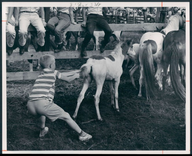 July 21, 1963 - CHINCOTEAGUE PONIES -- This lad is trying to help gather ponies for the auction stand. Photo by Richard Stacks