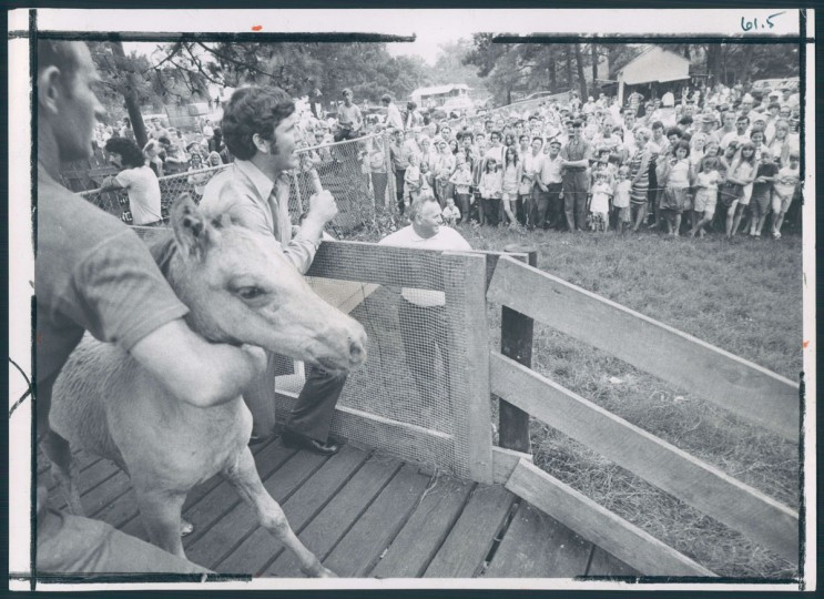 Chincoteague Island Pony Roundup, photo dated August 4, 1970. (Baltimore Sun archives)