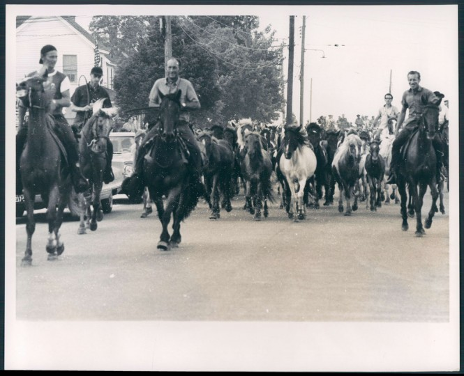 Chincoteague Island Pony Roundup, photo dated August 20, 1970. (Baltimore Sun archives)