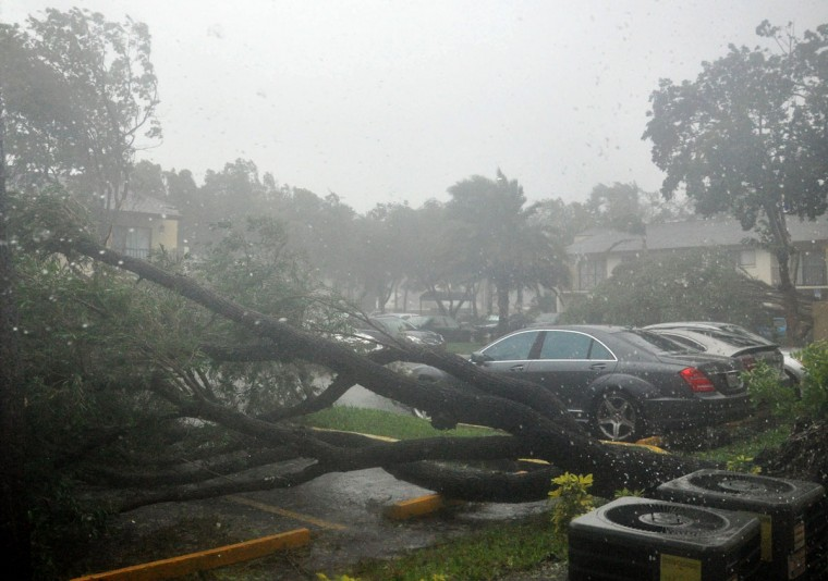 Trees are seen blown over in a parking lot as hurricane Irma moves through the area of Pembroke Pines, Florida on September 10, 2017. Hurricane Irma regained strength to a Category 4 storm early as it began pummeling Florida and threatening landfall within hours. / AFP PHOTO / Michele Eve SANDBERG