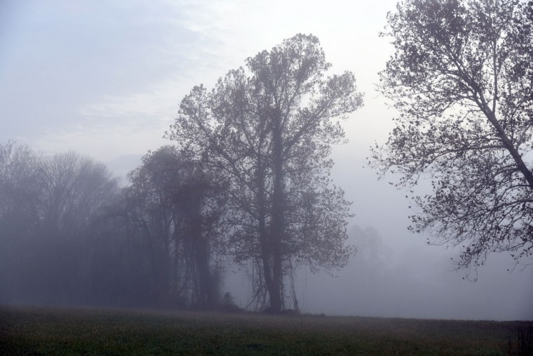 Early morning fog partly obscures trees on Notchcliff Road. (Barbara Haddock Taylor/Baltimore Sun)