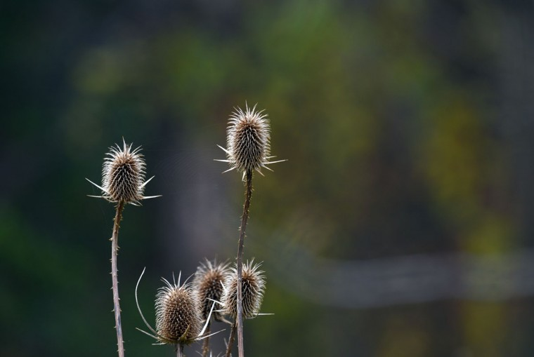 Seed pods and stems are drying up near Loch Raven Reservoir. (Barbara Haddock Taylor/Baltimore Sun)