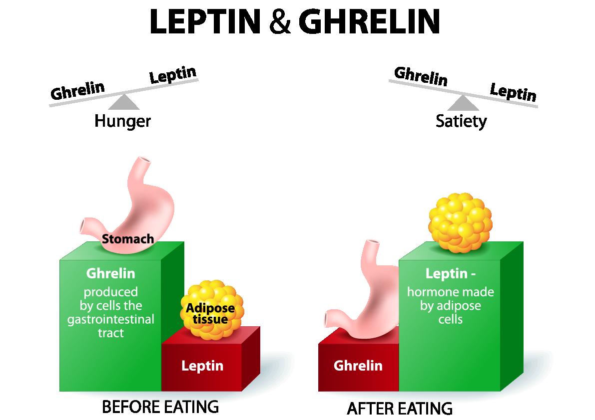 leptin ghrelin balance