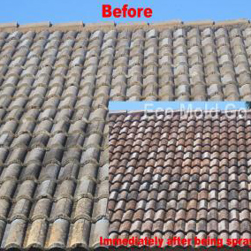Before Eco Mold Go / After Eco Mold Go Application