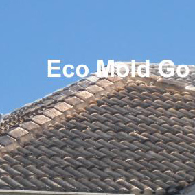 Before Eco Mold Go