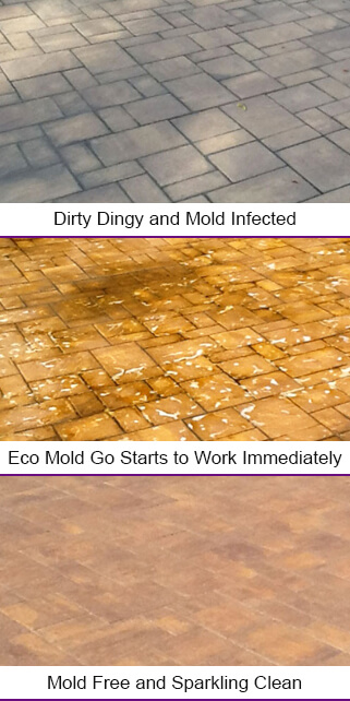 Eco Mold Go Products Eliminate Mold Infected Surfaces