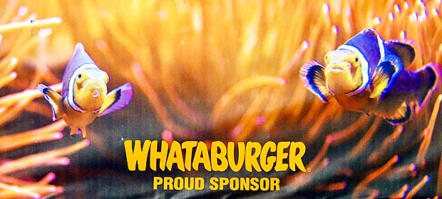 Whataburger ... Whataband ... CTJ Band