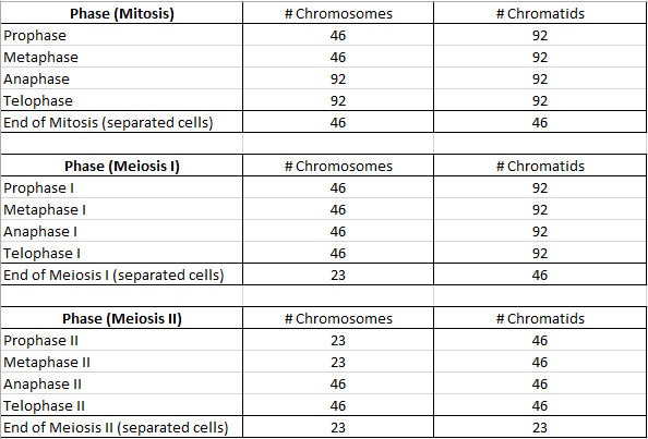 Worksheets Number Of Chromosomes Worksheet chromosome and chromatid numbers during mitosis meiosis dat full summary chart