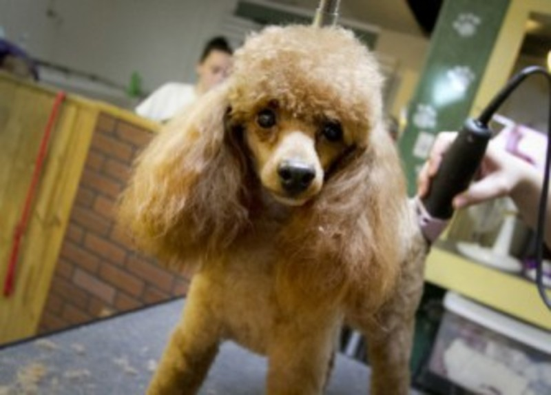 Pet grooming the mutt hutt dog grooming salon by bobie venice fl pet grooming the mutt hutt dog grooming salon by bobie venice fl home solutioingenieria Image collections