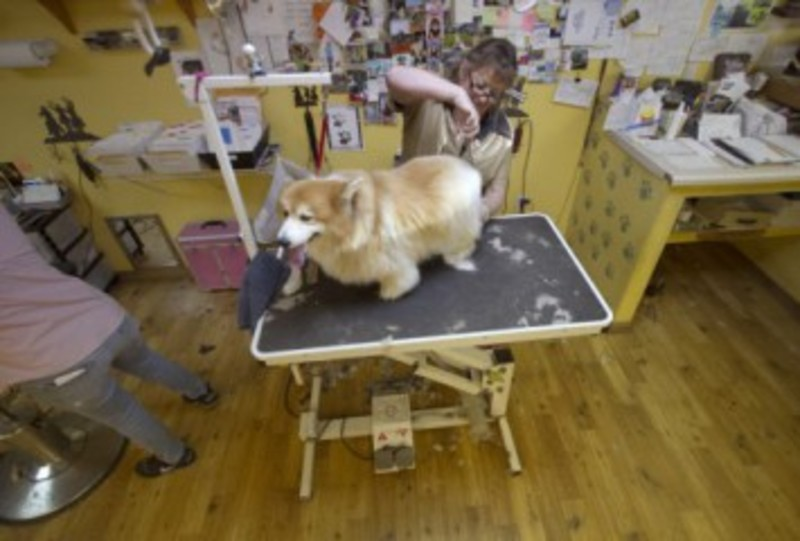 Pet grooming the mutt hutt dog grooming salon by bobie venice fl the mutt hutt grooming salon by bobie has been offering pet care and grooming services in venice fl for over 12 years we provide quality pet grooming solutioingenieria Image collections