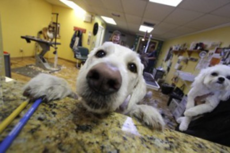Pet grooming the mutt hutt dog grooming salon by bobie venice fl pet grooming the mutt hutt dog grooming salon by bobie venice fl home solutioingenieria Images