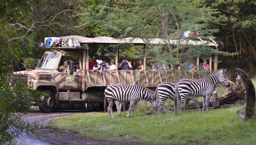 DAK Safari