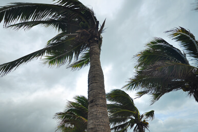 What to Do During High Winds