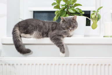 What's the Best Heater Temperature in Winter to Protect My Pets?