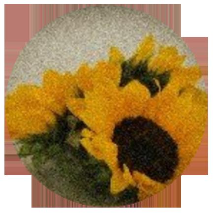 Logo Antesis Flores