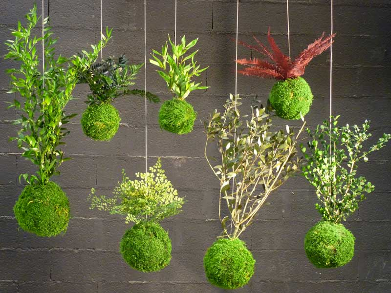 The kokedama, the japanese floral art