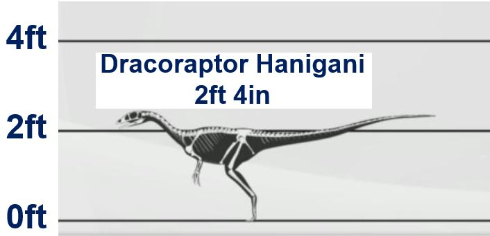 Dracoraptor-Hanigani-was-quite-short