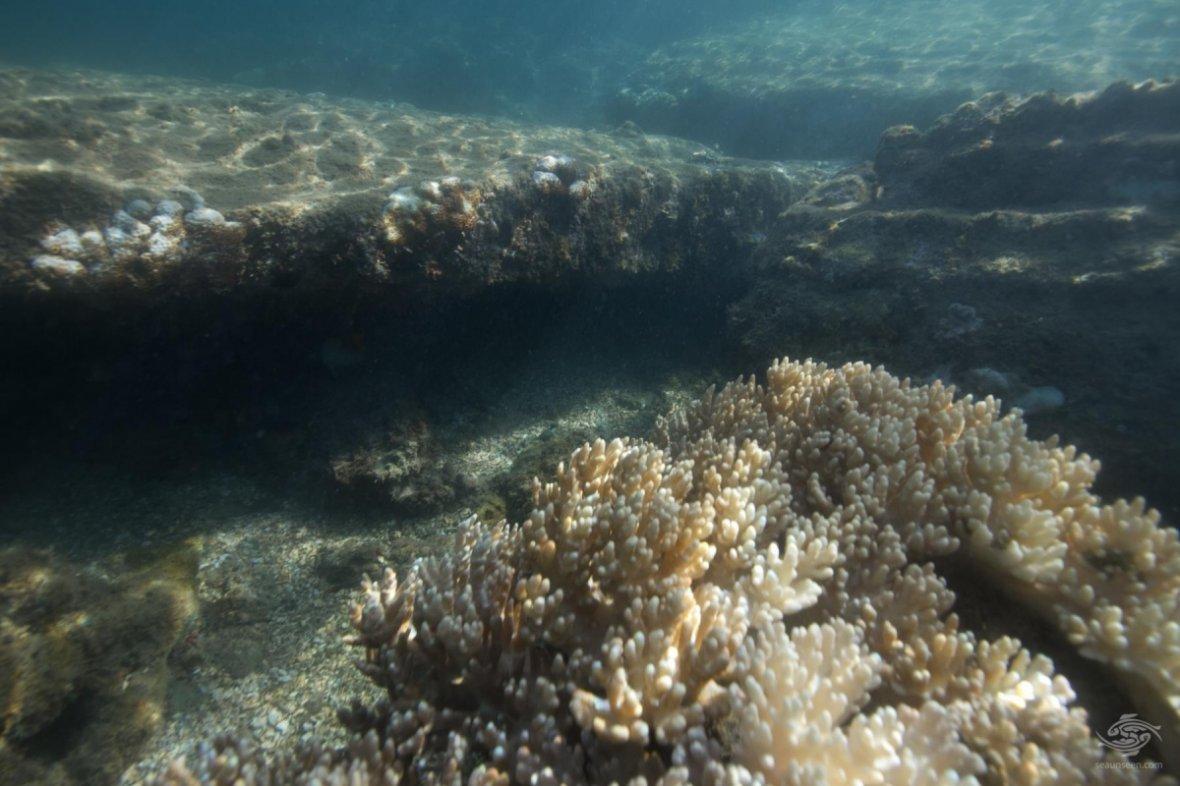underwater-city-mafia-island (2)