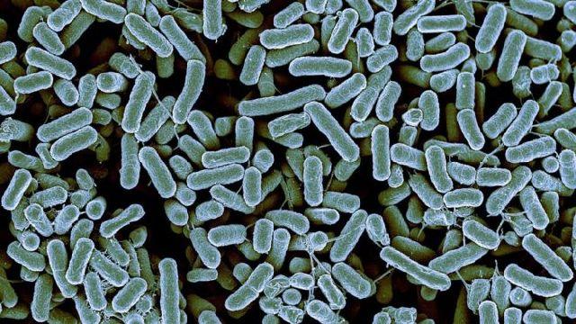 bacteria-resistant