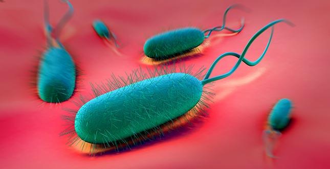 H. pylori: de ziektekiem achter maagzweren en kanker