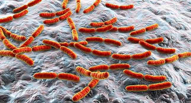 Darmbacteriën helpen je gezond te blijven