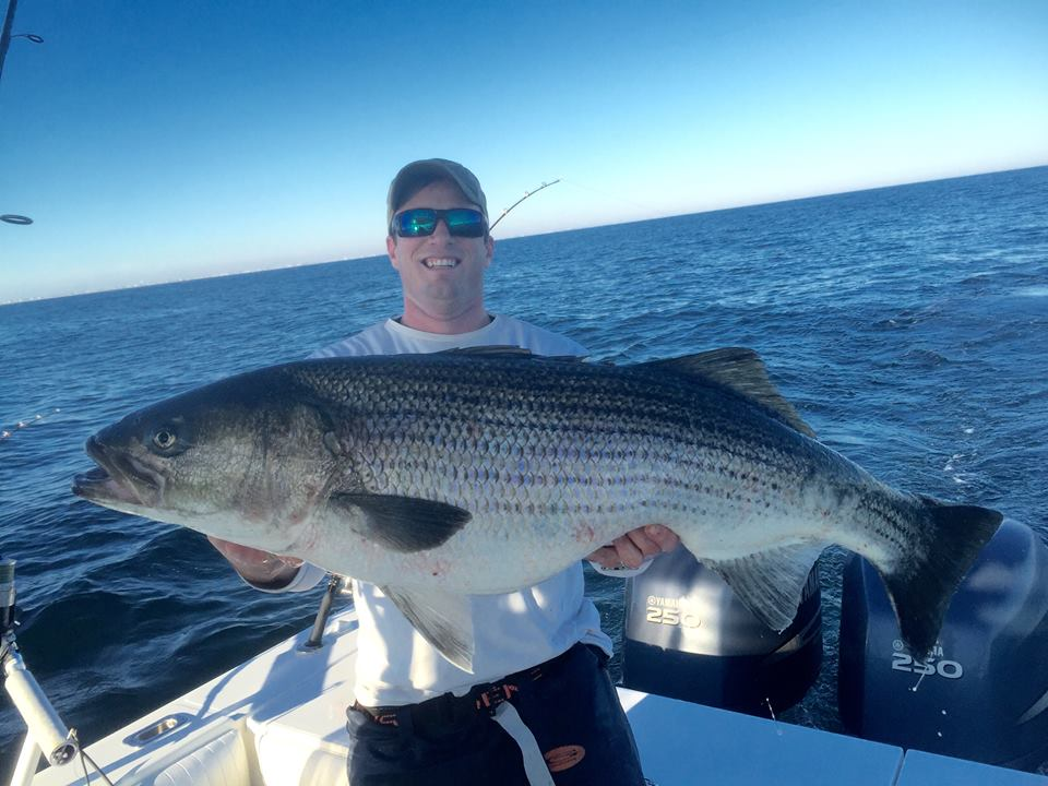 delaware, sussex county, striped bass, beach haven, new jersey, migratory striped bass, rockfish, linesiders, long beach island state park