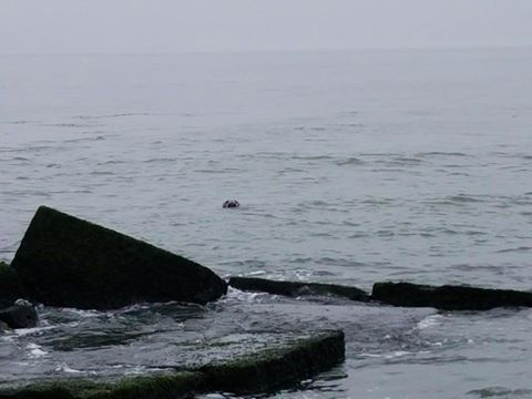 seal, delaware, sussex county, lewes, haystacks, ice breakers, inner wall, outer wall, harbor of safe refuge,
