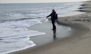 dewey beach, replenished beach, delaware, sussex county,