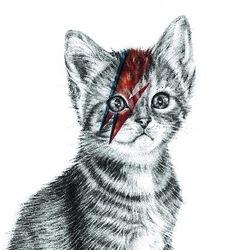 Kitten Mayakara