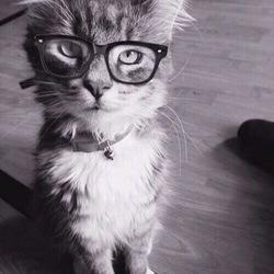Wine Cat