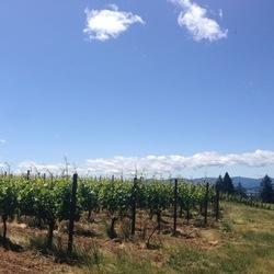 Soter Vineyards